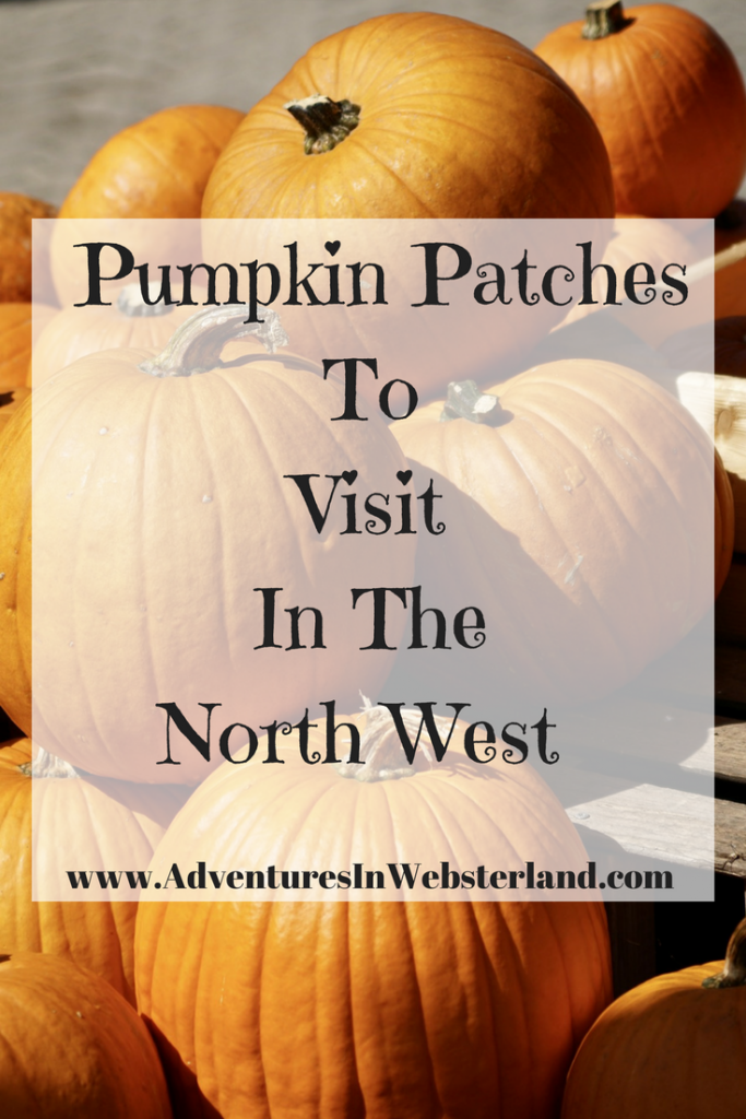 5 Pumpkin Patches To Visit In The North West