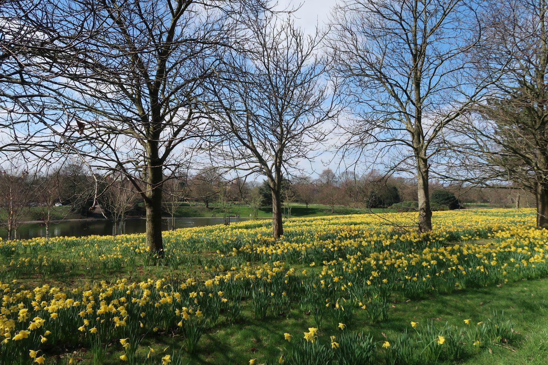 Sefton Park In The Spring