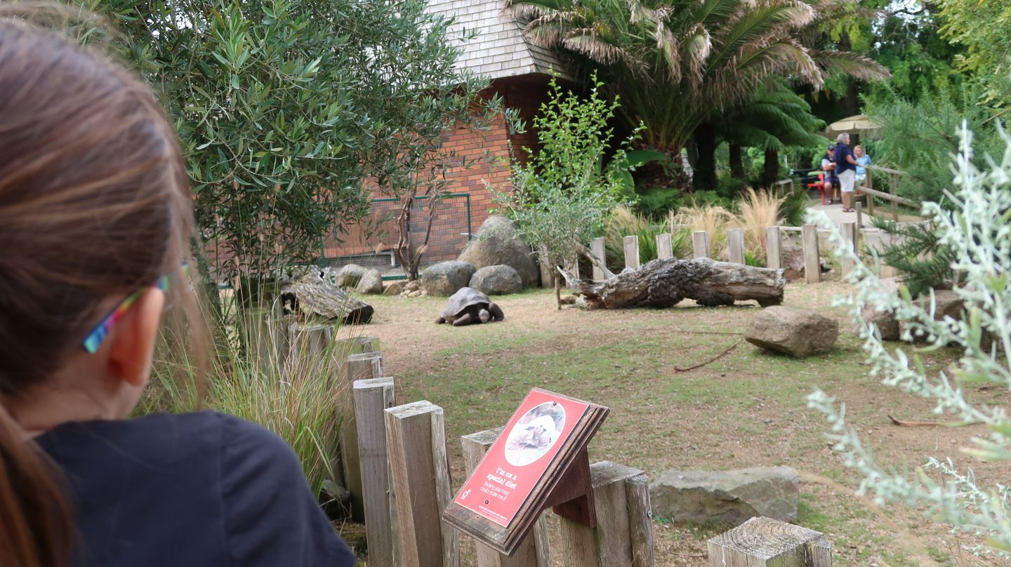 girl watching giant tortoise at jersy zoo